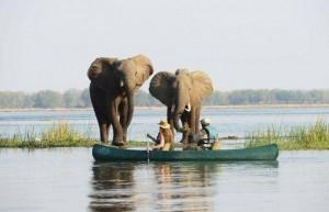 Cano safari met olifanten