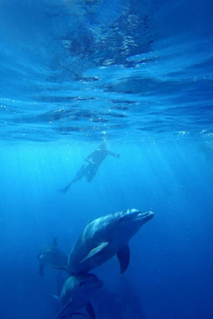 Schwimmen mit wilden Delfinen zu Kizimkazi Sansibar
