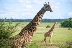 safari prijzen