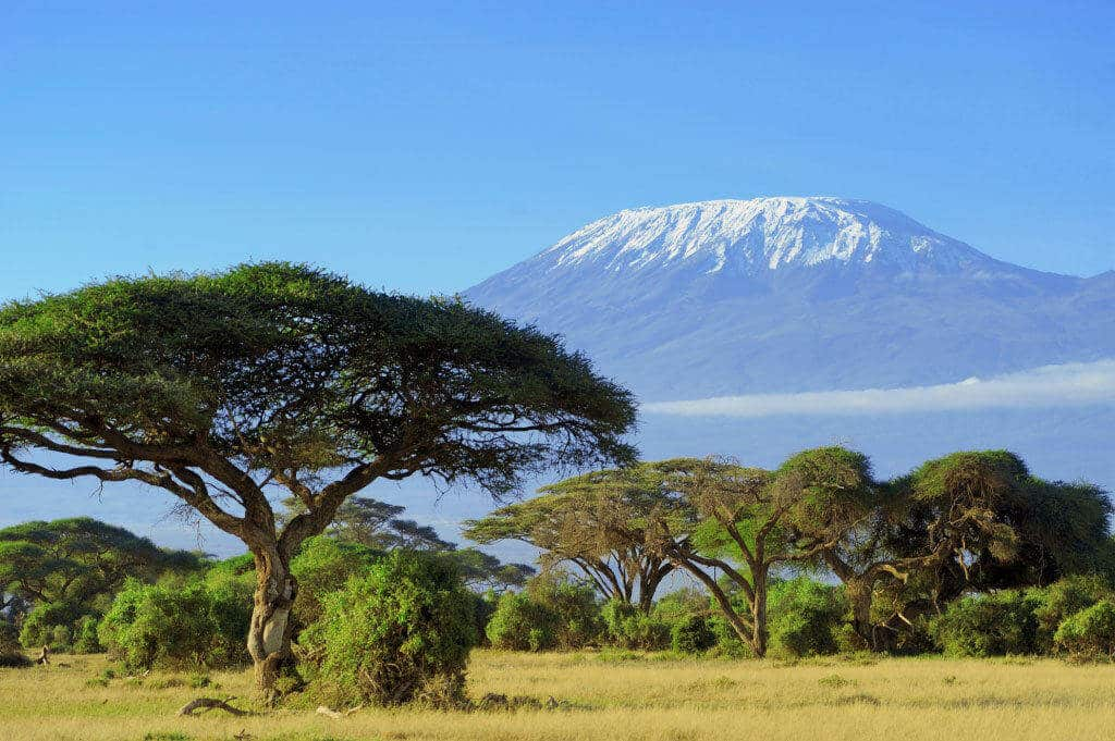 Image result for Kilimanjaro