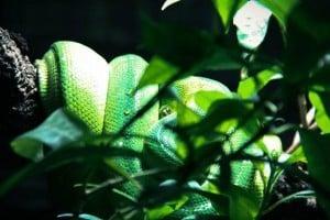 Slangenpark