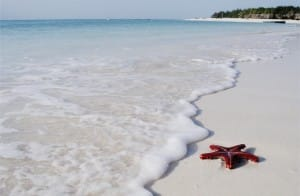 White sandy beaches at Zanzibar!